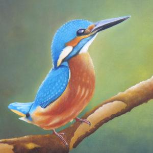 302f - IJsvogeltje op takkopie